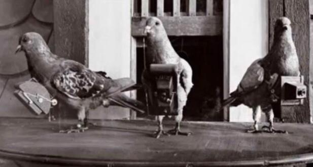 昔は、今のグーグル・アースのような役割をカメラを持った鳩が担っていた